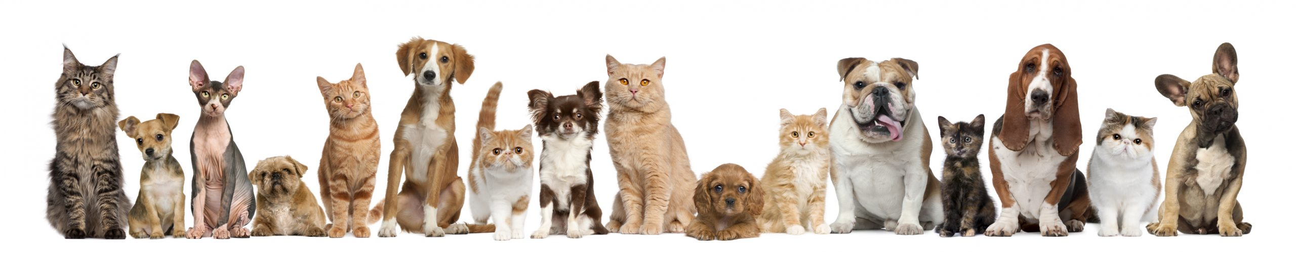 Image of pets together eagerly waiting for Go For Raw meals